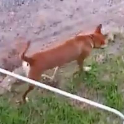 同じ県内で迷子になった犬の写真
